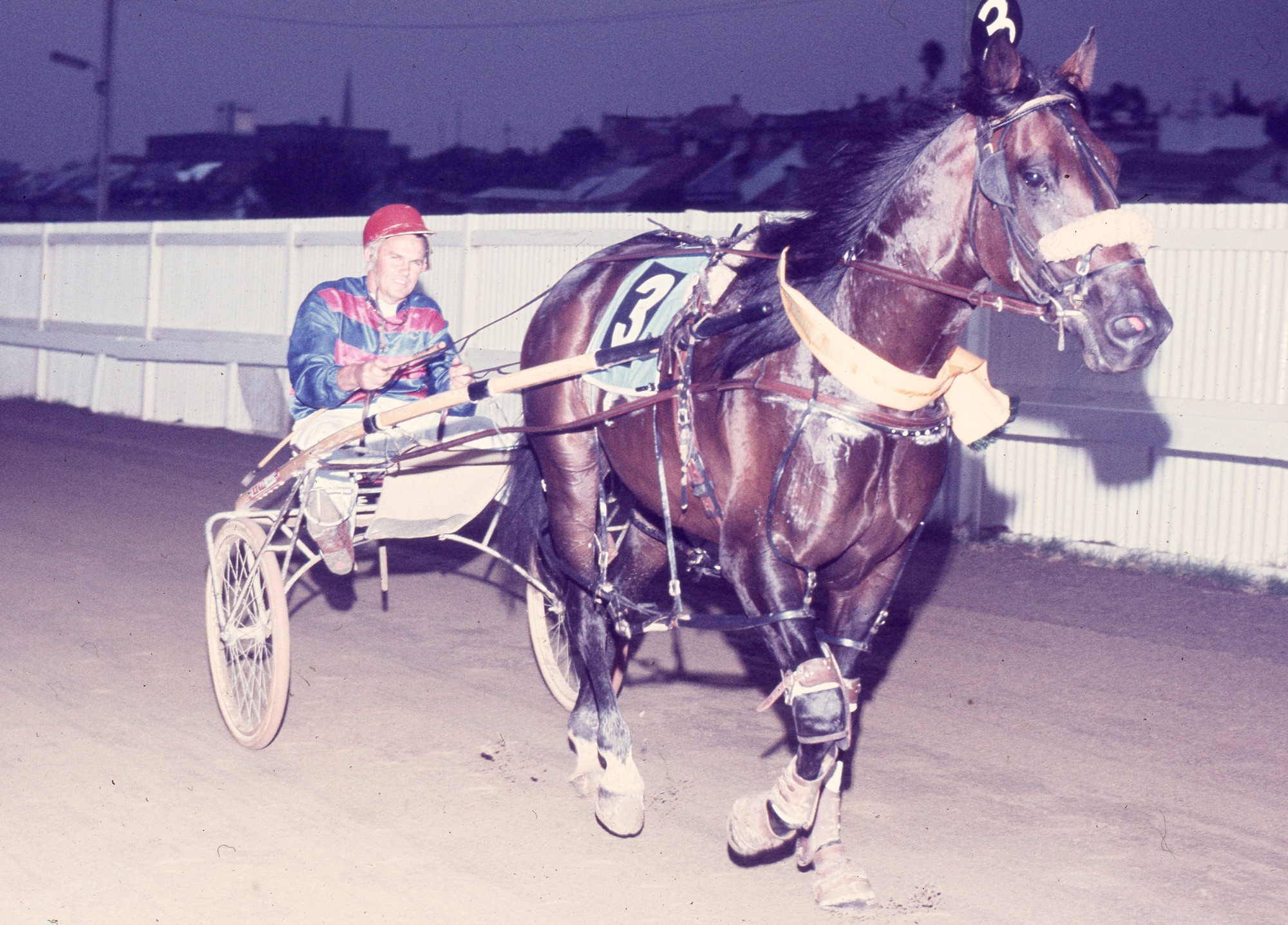 Image courtesy National Trotguide - Hondo after one of three heat wins 1973 Interdom.