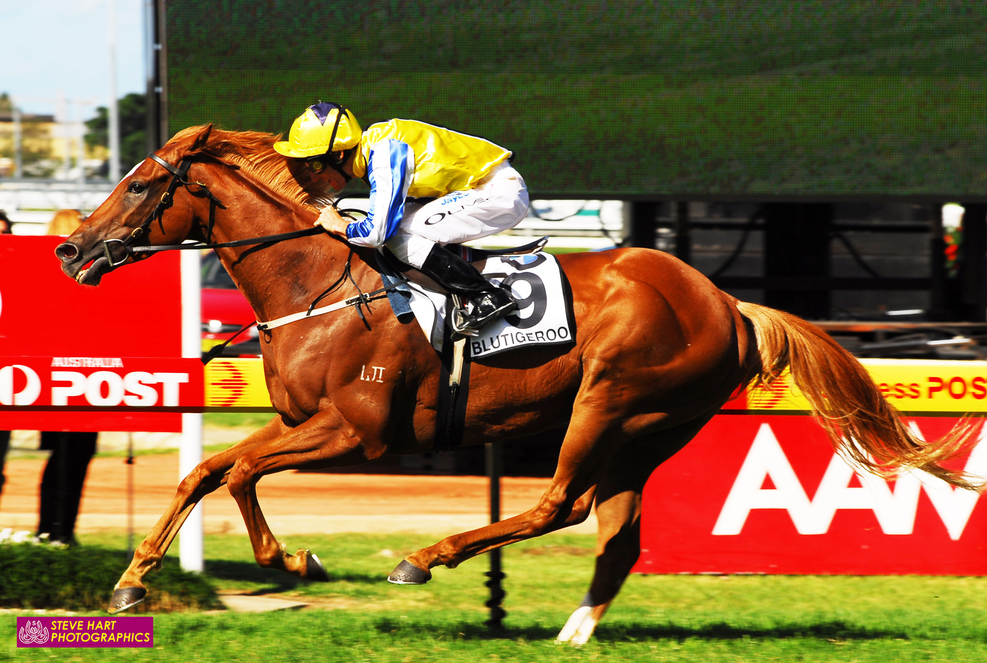 Image courtesy Steve Hart Photographics - Col Little and Damien Oliver team up again to win The BMW with Blutigeroo.