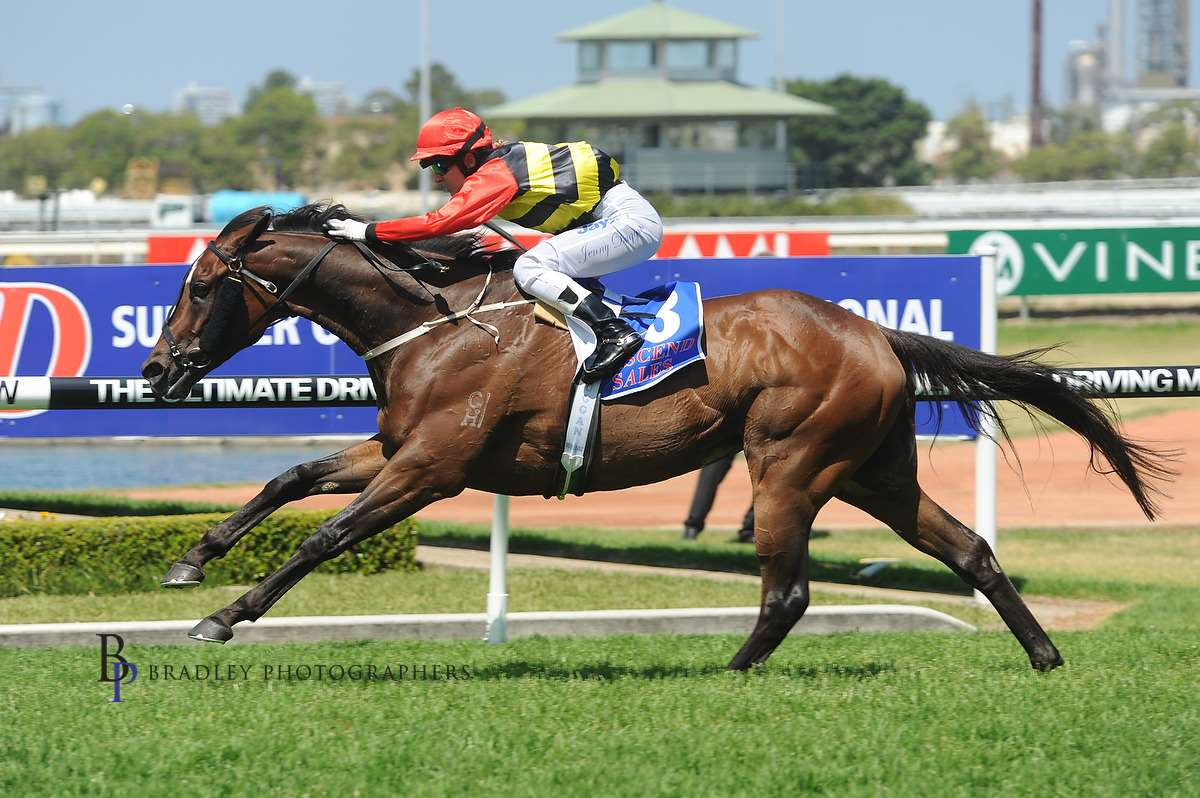 Image courtesy Bradley Photographers - Jenny won five races on Cantonese including this one at Rosehill Gardens 24/11/2012.