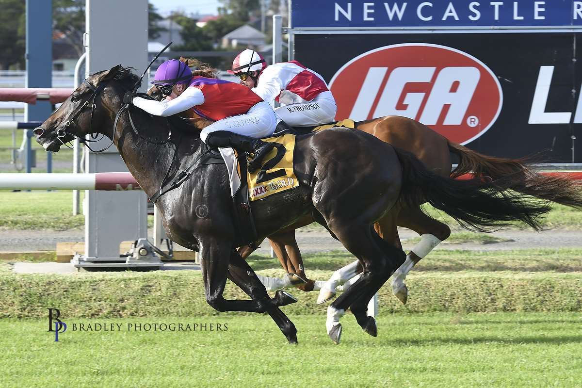 Image courtesy Bradley Photographers - Shaun in one of four wins on the Richard Freedman trained Latin Boy.