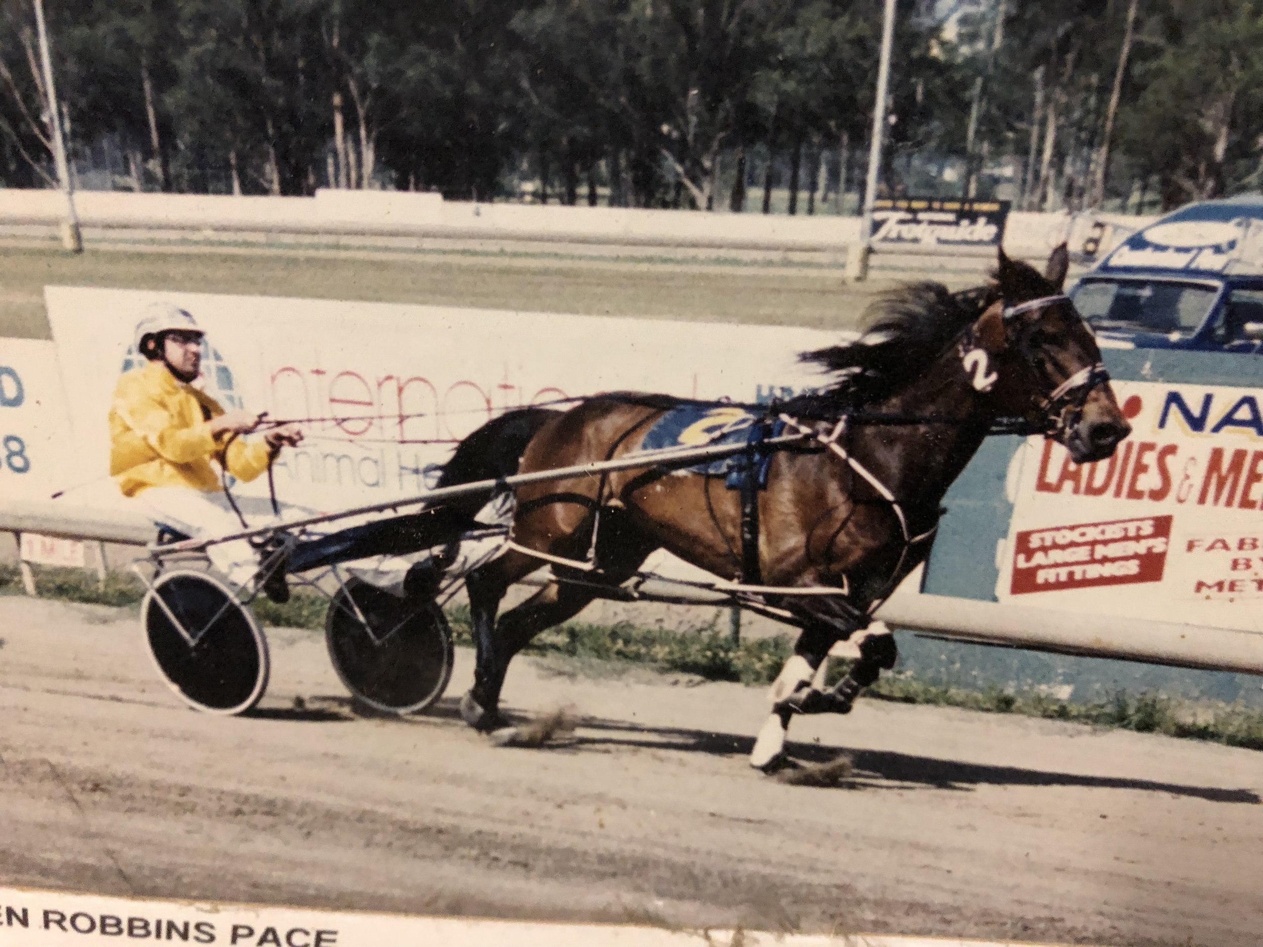 Jim Rando has always used freelance drivers. He drove this one himself, Bold Sun at Fairfield.