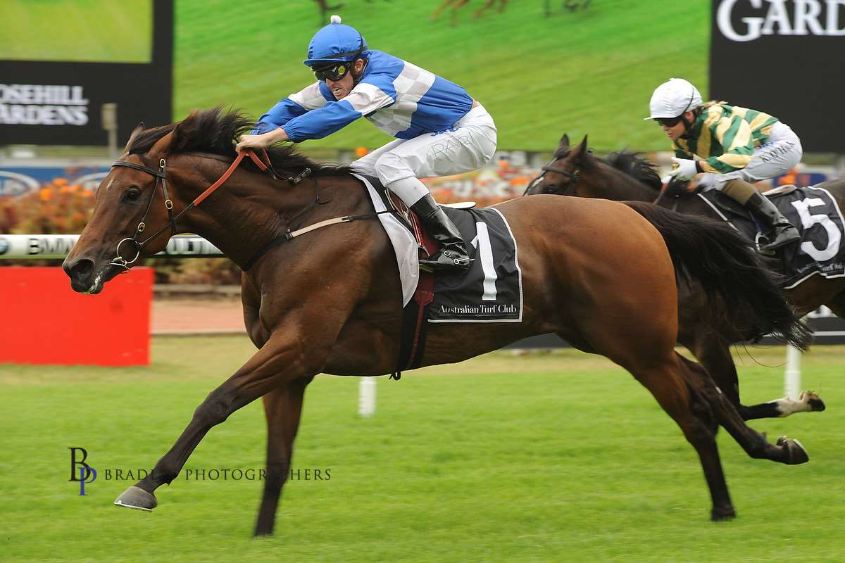 Image courtesy Bradley Photographers - Frozen Rope in one of his 8 wins. Rosehill 19/01/2013 Josh Parr up.