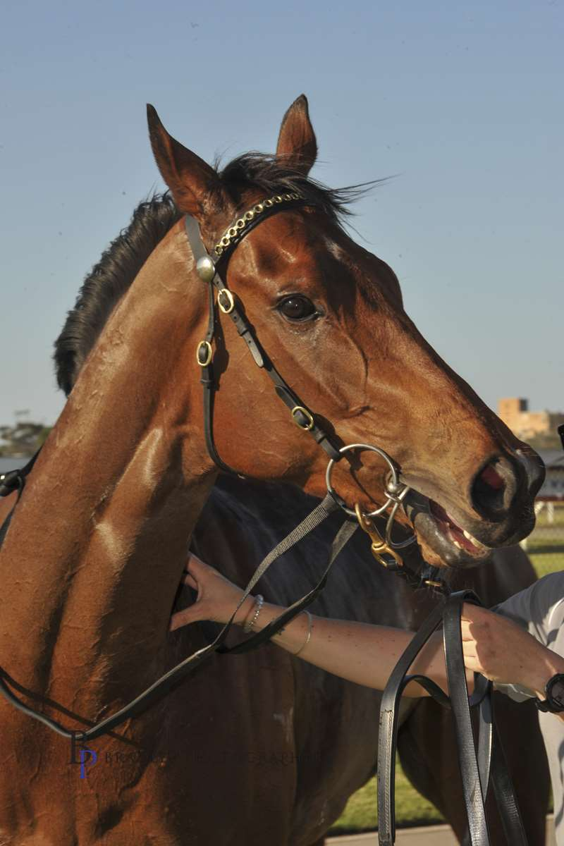 Image courtesy Bradley Photographers - The promising Calipari will have his next start over the Newcastle Cup Carnival.