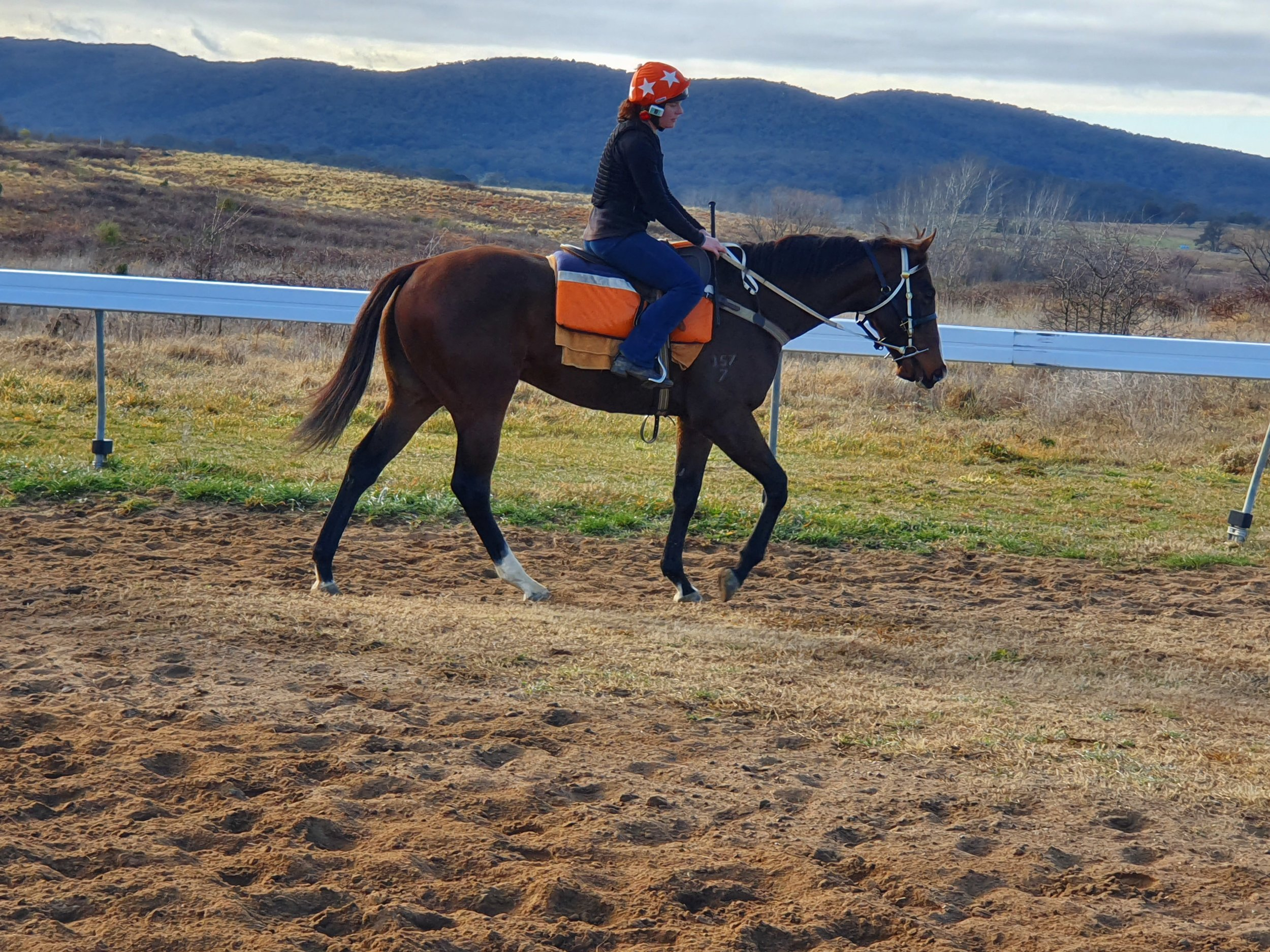 Danielle works her 2 year old Nicconi colt at Goulburn.