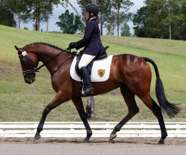 Dex spent 3 happy years at Bimbadeen Park. Here he is in the dressage discipline with Niki Rose in the saddle.