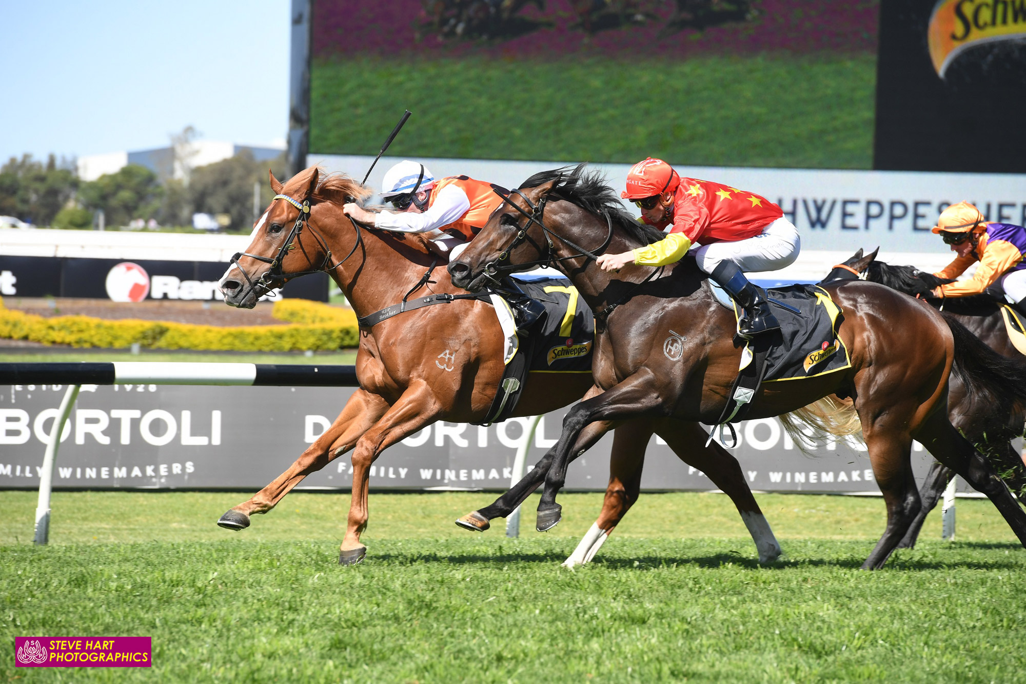 Image courtesy Steve Hart Photographics - Standout overcame a significant class rise to win the Heritage Stakes.