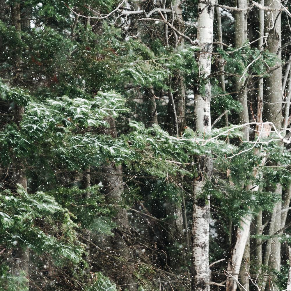 Winter of Québec - Anthony Ledoux - Photographer and Filmmaker - Photographe 20.jpg