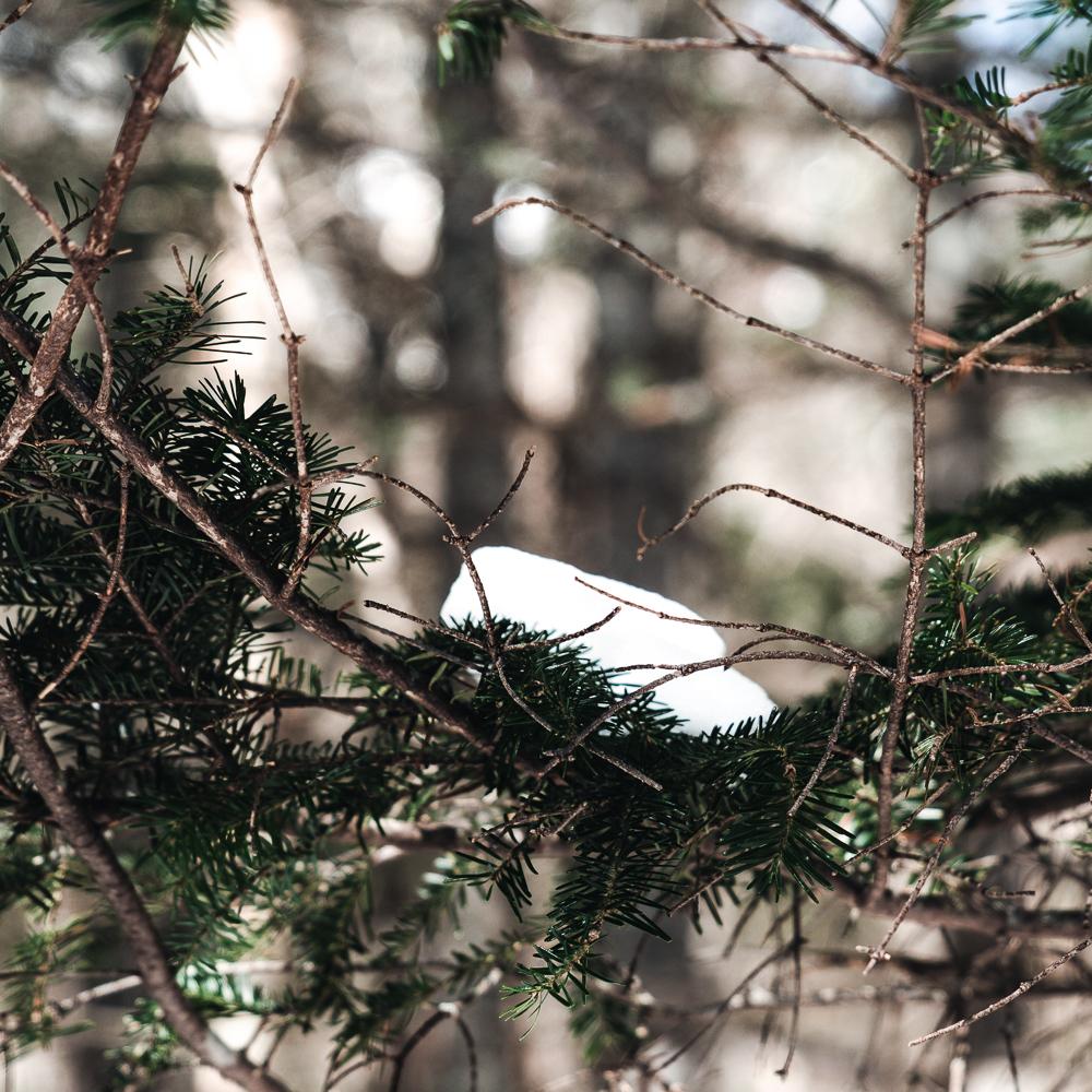 Winter of Québec - Anthony Ledoux - Photographer and Filmmaker - Photographe 21.jpg