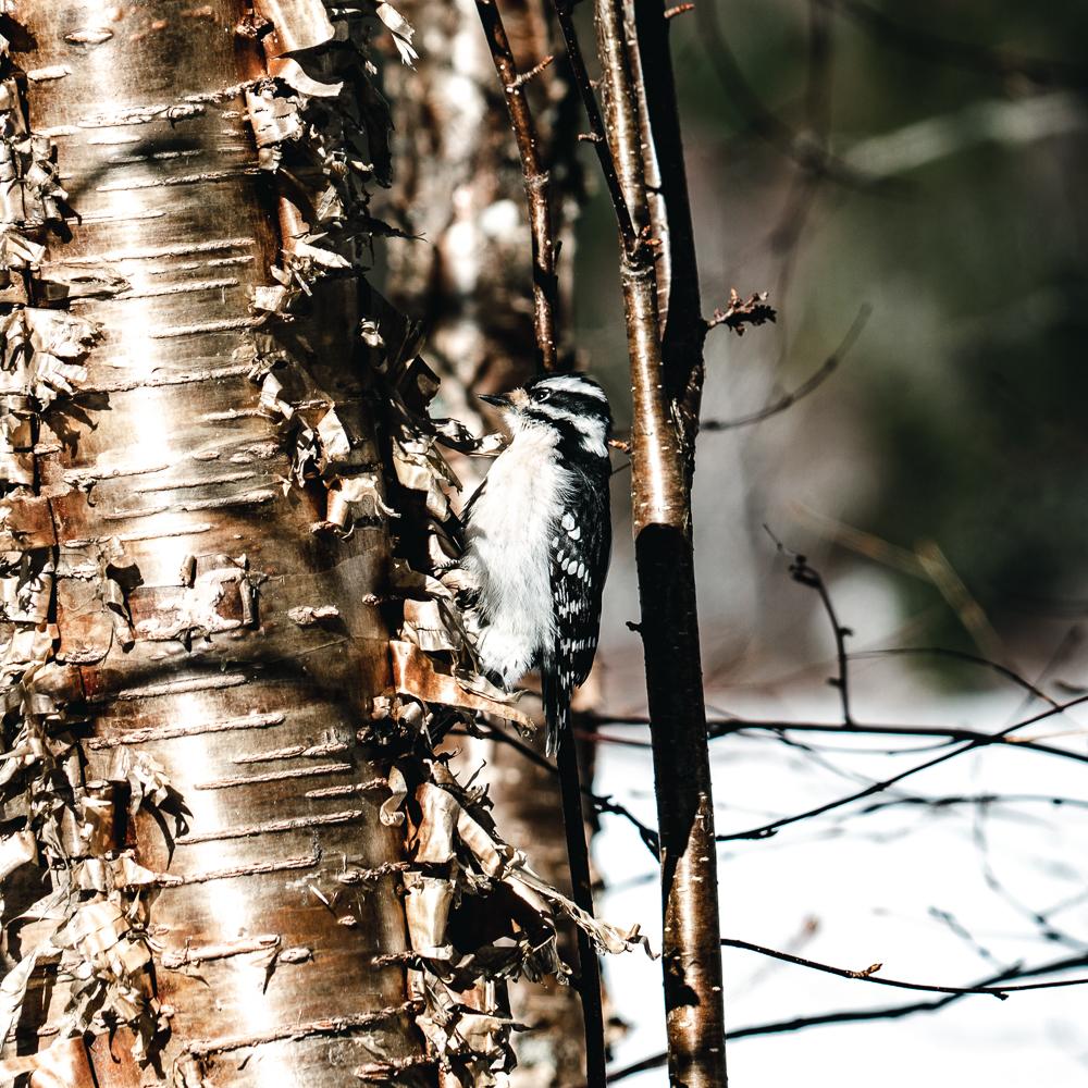 Winter of Québec - Anthony Ledoux - Photographer and Filmmaker - Photographe 22.jpg