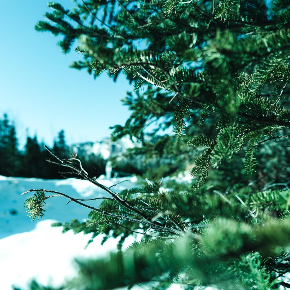 Winter of Québec - Anthony Ledoux - Photographer and Filmmaker - Photographe 23.jpg