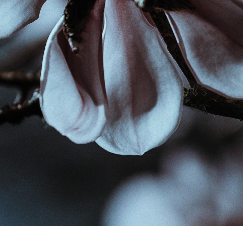 magnolia_Quadrat 6.jpg