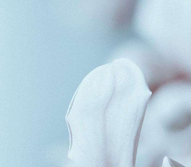 magnolia_Quadrat 7.jpg