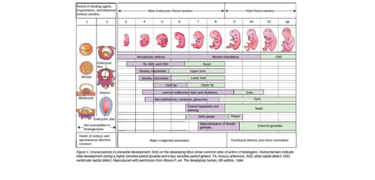 Figure 1. Chordonik E, Iacobucci A. (2004). Use of chemotherapy during human pregnancy.  Lancet Oncol. , 5(5), 283-291.