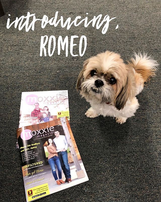 Hey #HayCo! My name is Romeo! I'm the office pet over here at Moxxie Marketing and I'm introducing my section of the monthly Moxxie Magazine! I want to reach out to other office pets in Haywood County and get to know you a little better! If you would like to be interviewed and featured in our magazine, send us a message or leave us a comment! Can't wait to meet all the other fur buddies out there! Hope you have a woof-n-dul day!🐶🤗 • • • #wearehaywood #dailyhaywood #lifeinthesmokies #localsof828 #haywoodcounty #haynow #hayco #supportlocalbusiness #yourconnectiontoourarea #augmentedreality #engagedandenergized #828isgreat #themoreyouknow #discoverthis #discoverthat #discoverhaywood