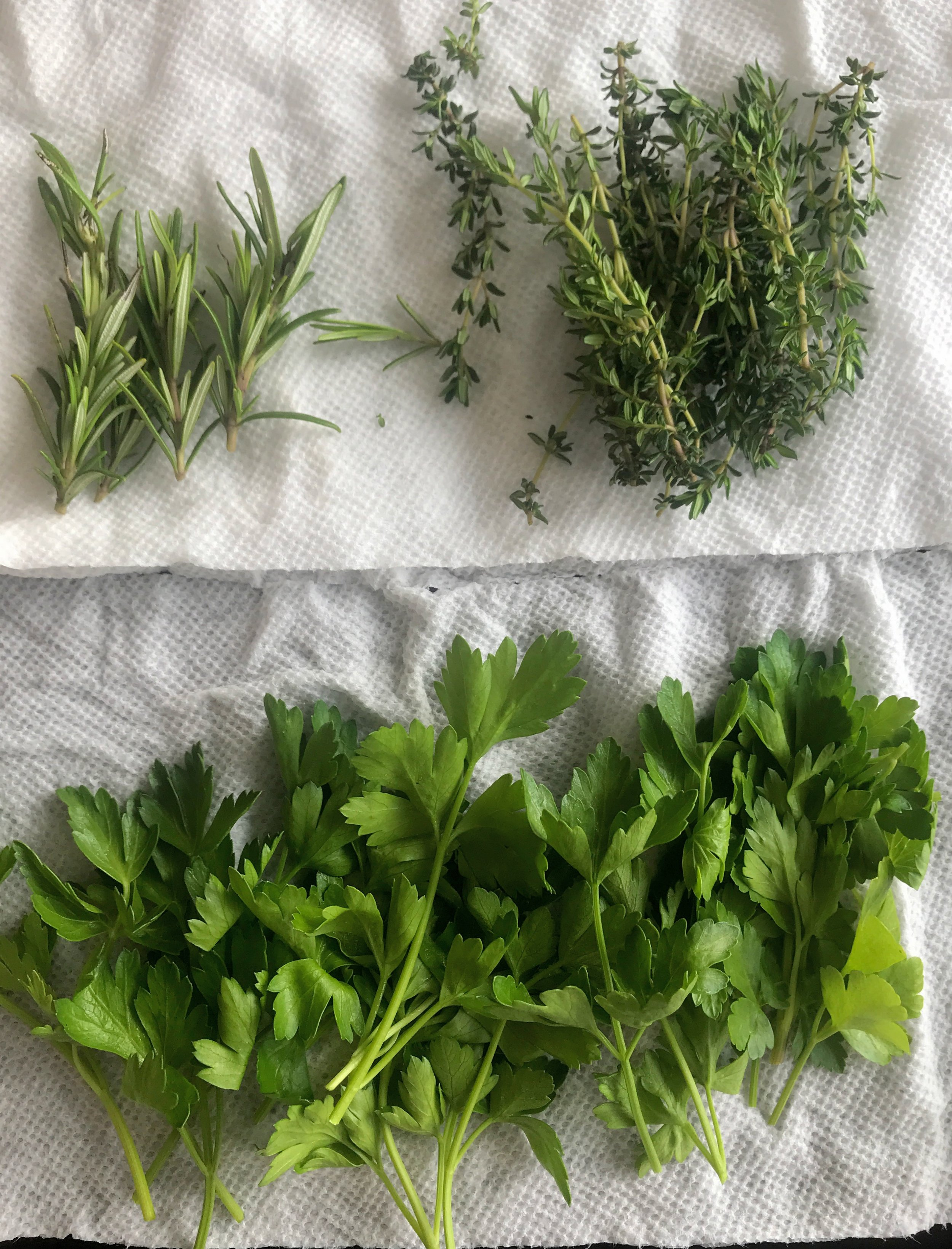 Rosemary, Parsley and Thyme ready to go for our Infused Pesto! These were grown by our lovely boo, Sebastopol Ben!