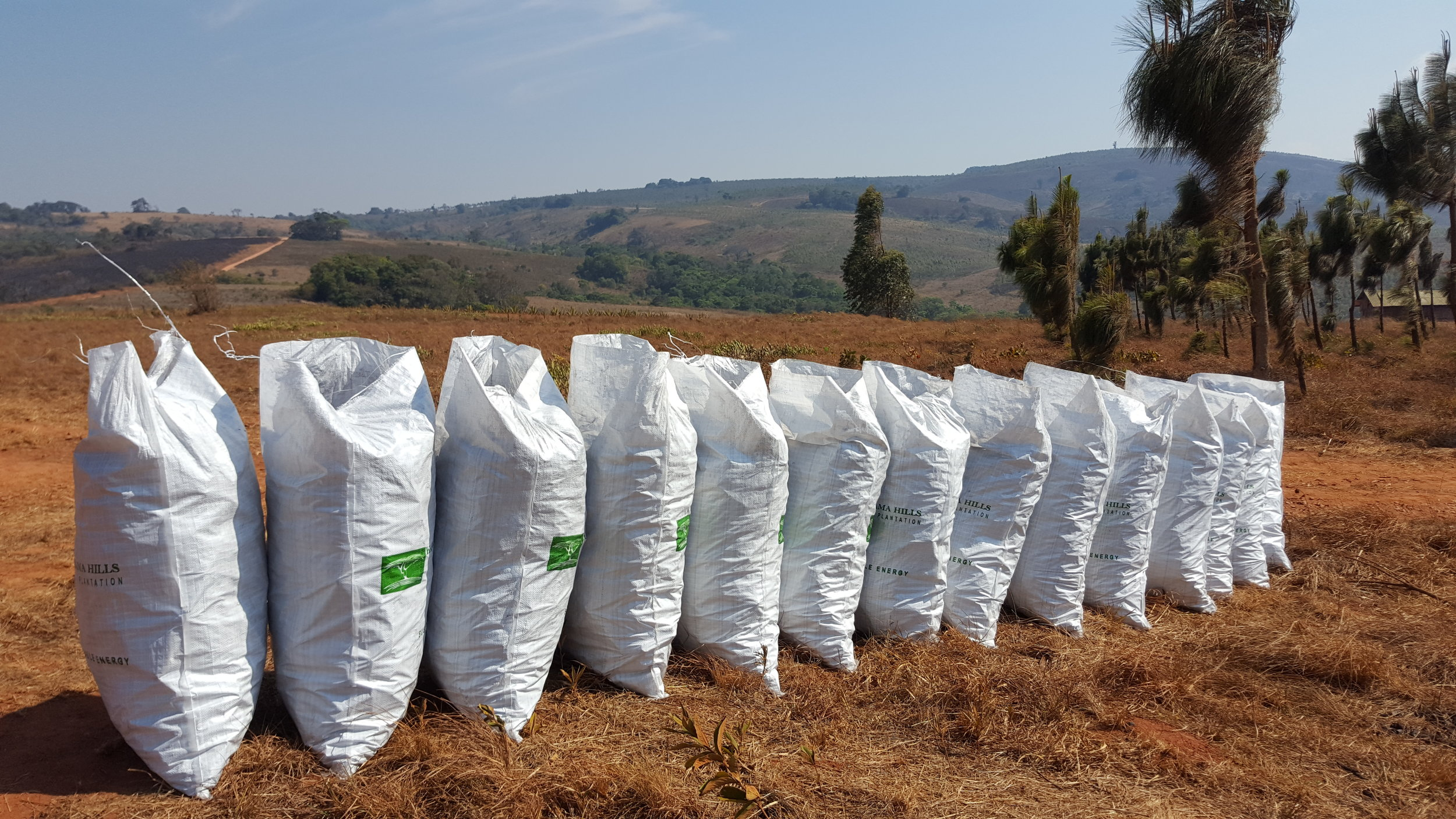 Our 15kg bags ready for distribution to the local market
