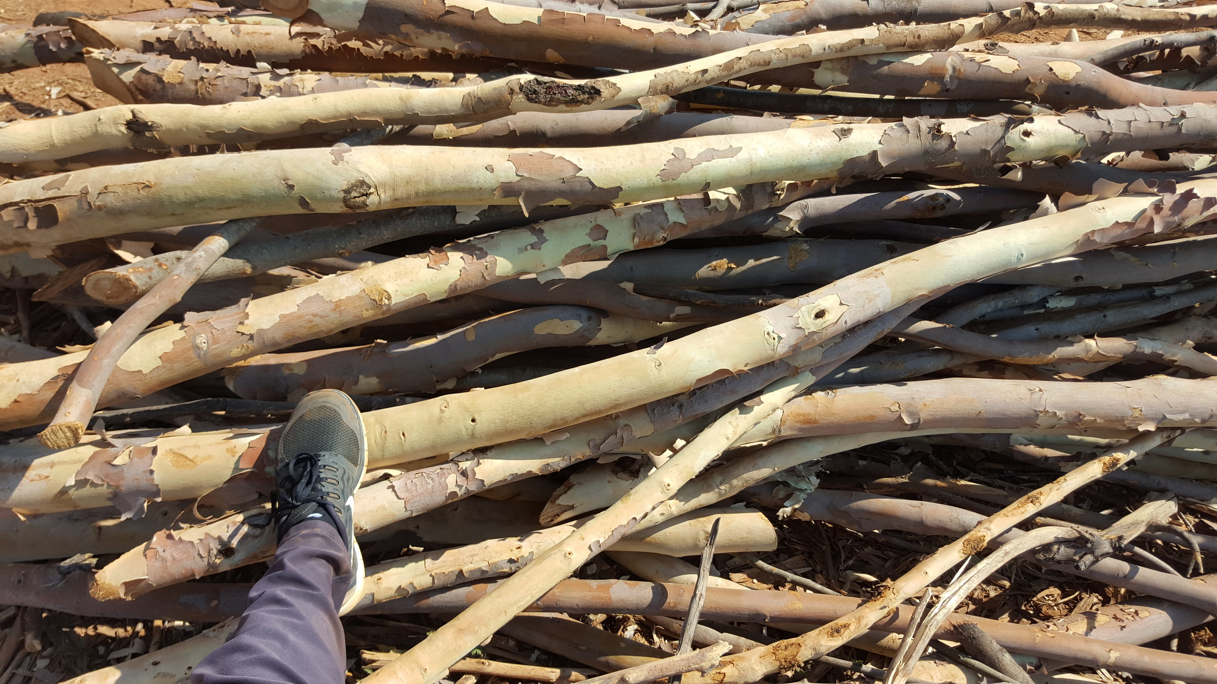 Three year old poles that will be burnt in the bee-hive kilns