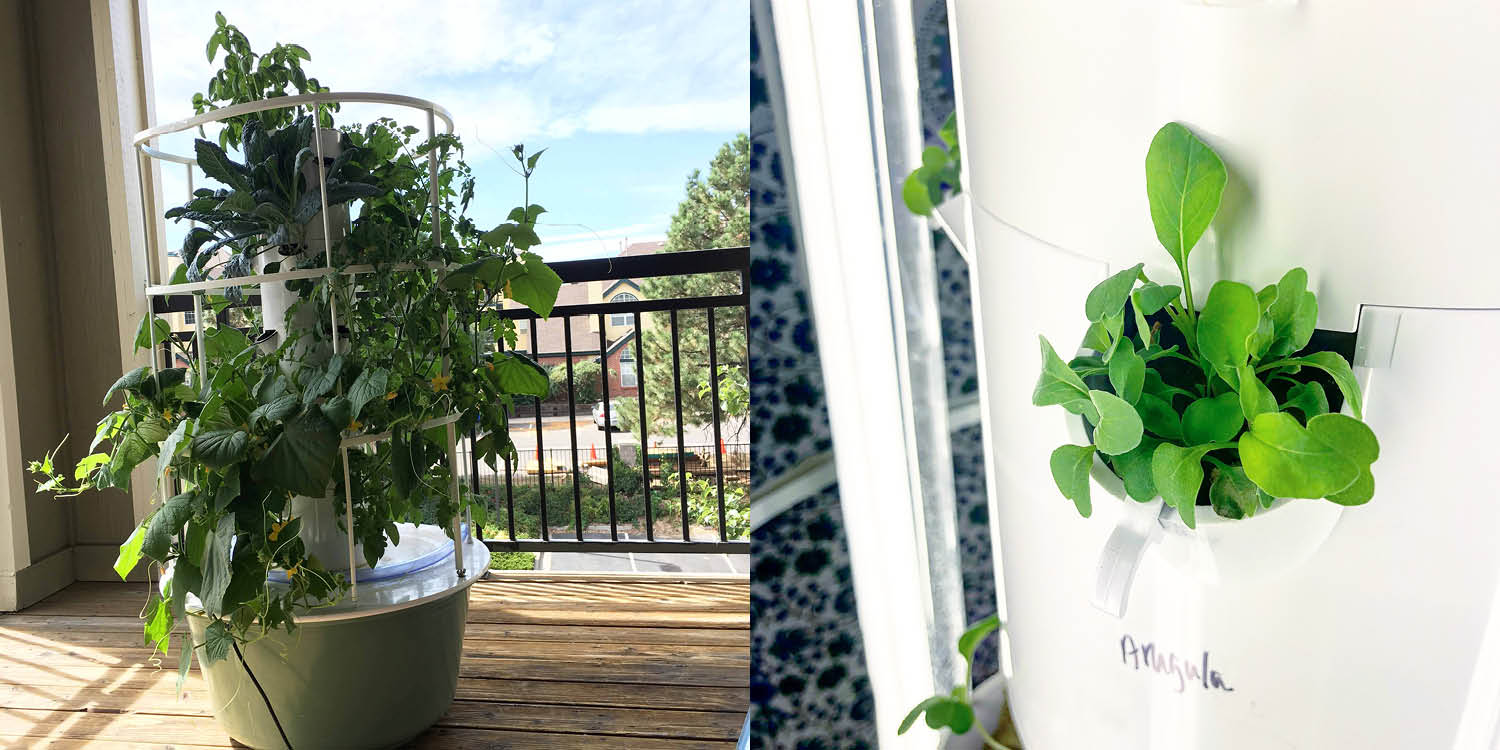 Ever heard of a Tower Garden?