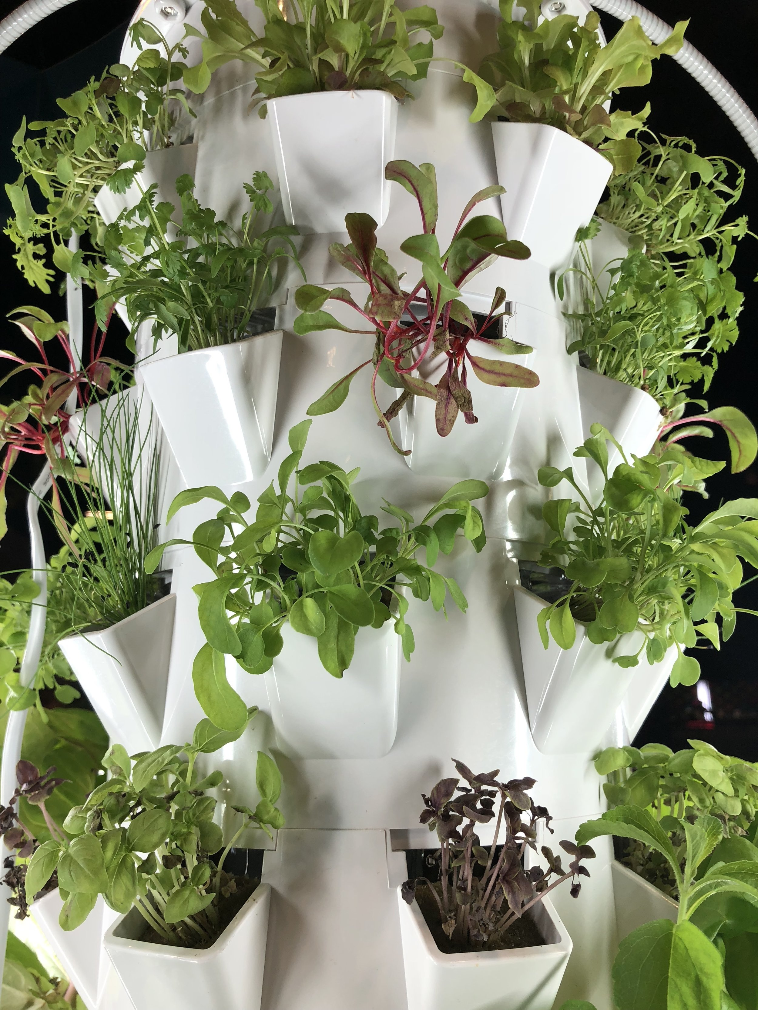 Products like the Tower Garden are ways in which you can grow your OWN food! Check out these micro-greens.