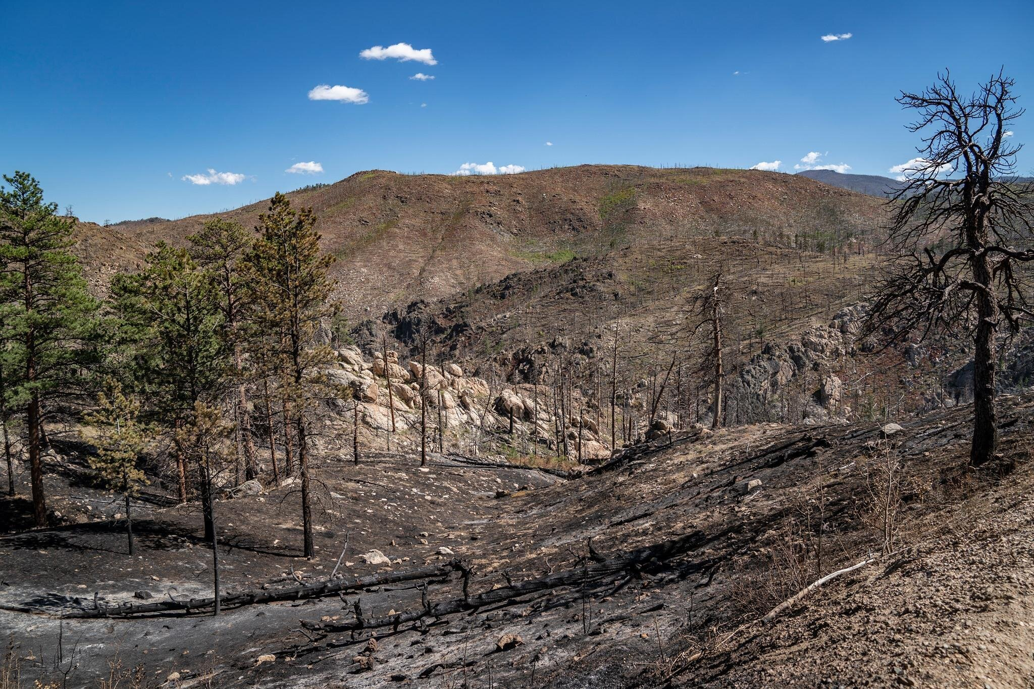 Coalition for the Poudre River Watershed-Cameron Peak Fire