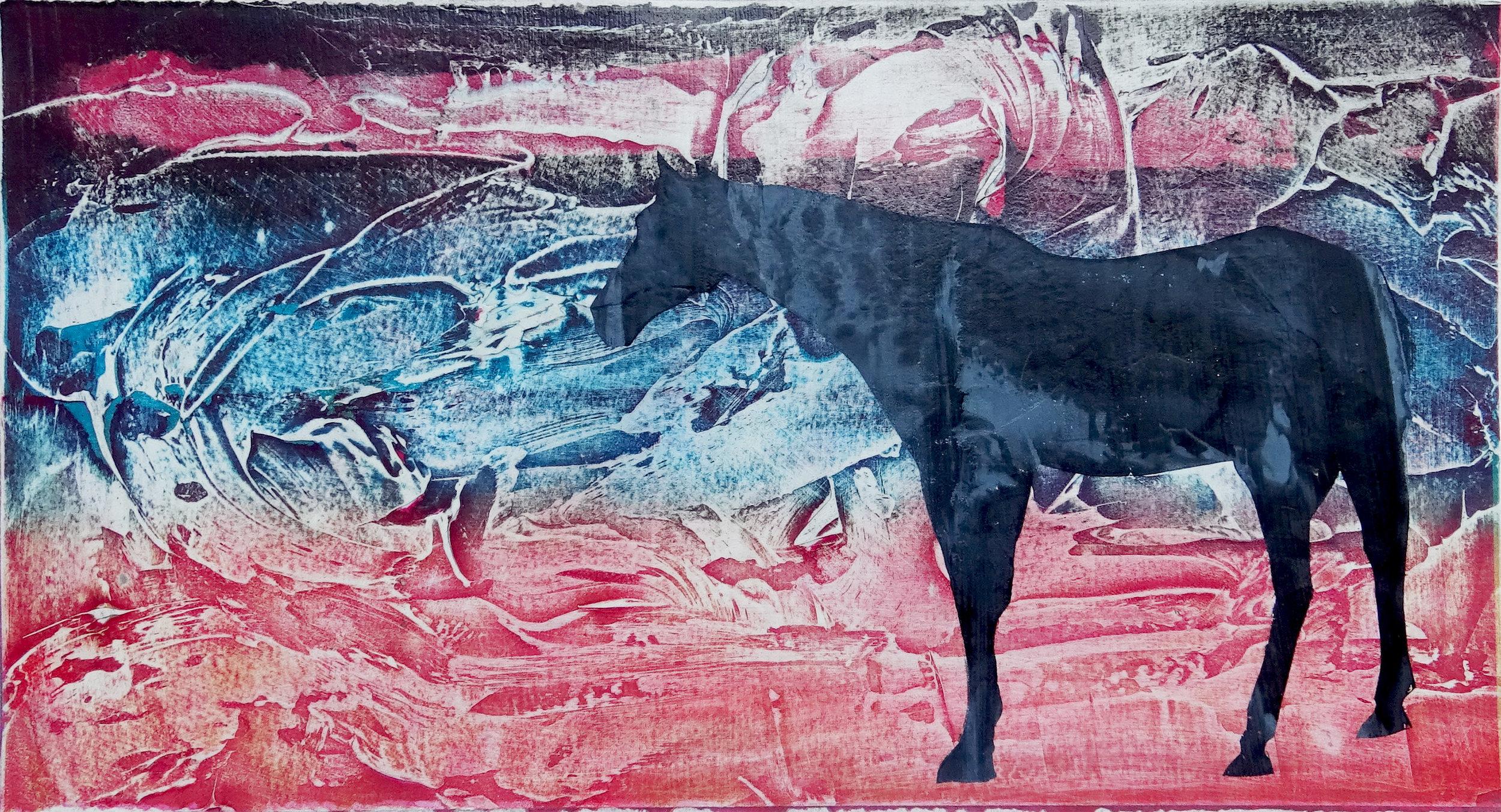 Nakoda Horse , 2016
