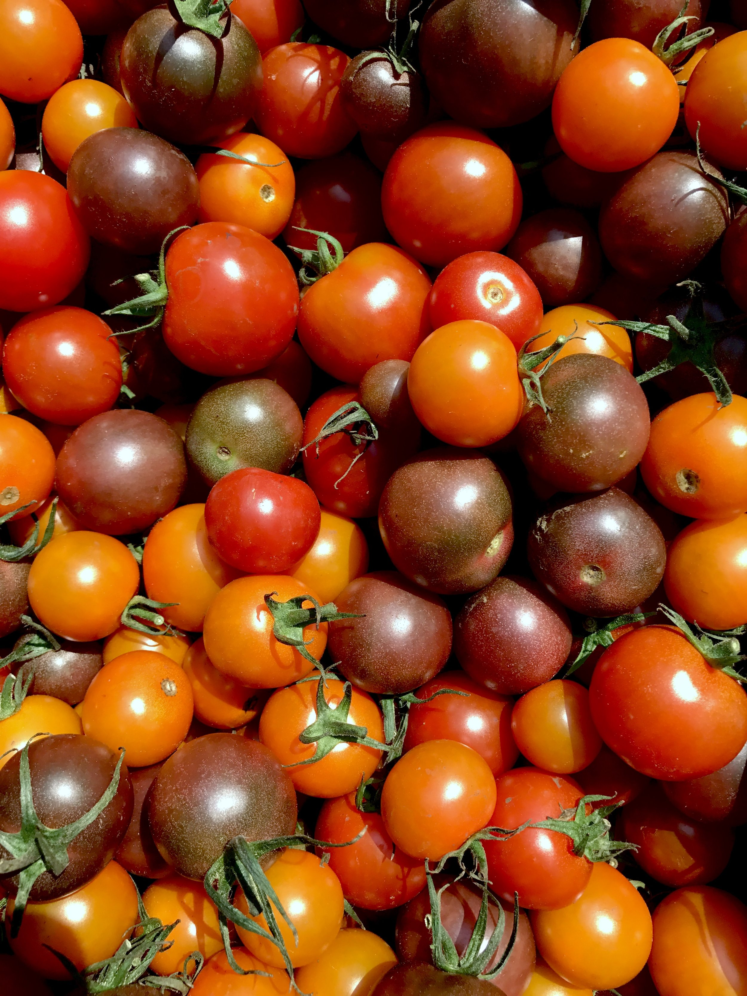 cherry_tomatoes_BFM.png