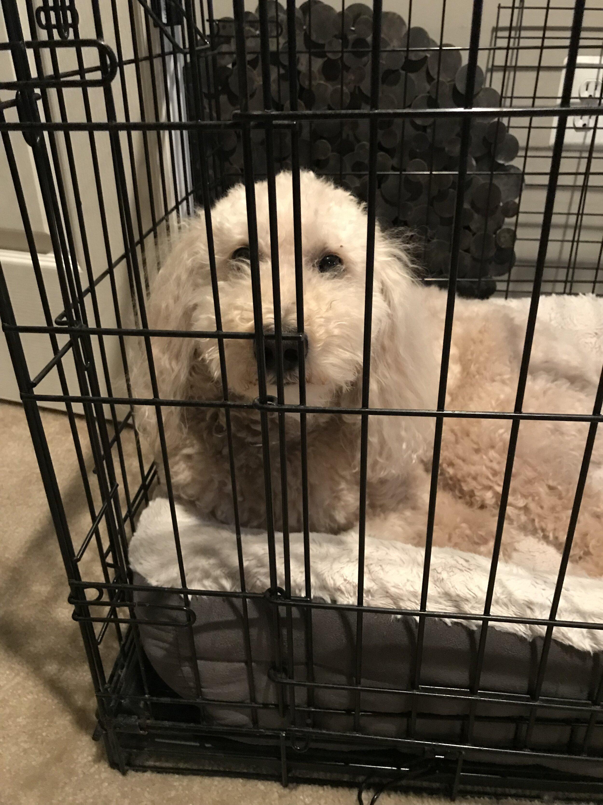 Meet Cooper