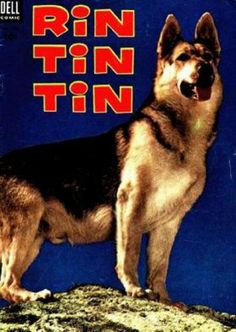 Rin Tin Tin.jpg