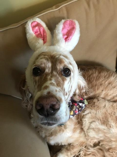bunny setter.jpg