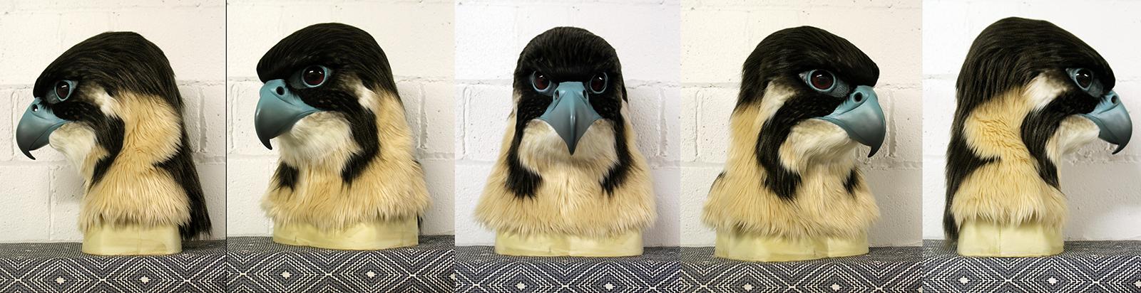 """""""Maxima"""" Young Peregrine Falcon"""