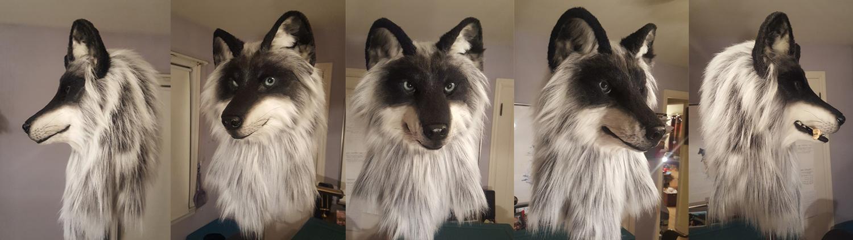 """TAIGA"" Black-Phase Grey Wolf"