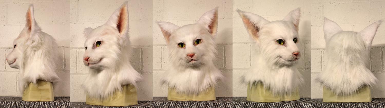 """Cora"" White Domestic Shorthair Cat"