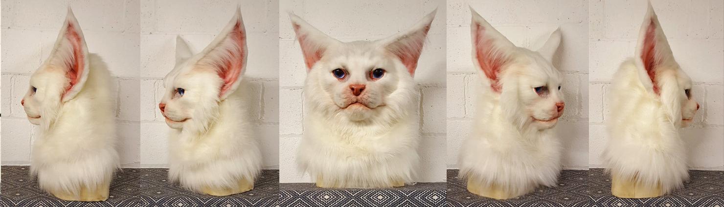 """LUNA"" White Maine Coon Cat"