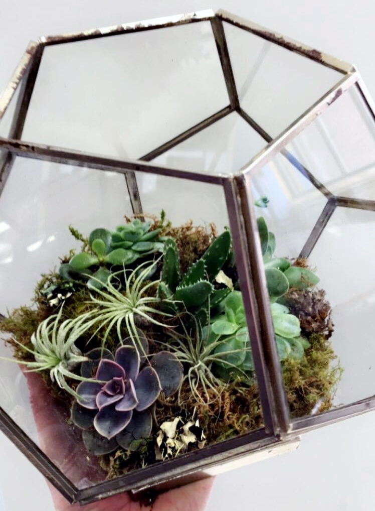 geometric terrariums 001.JPG