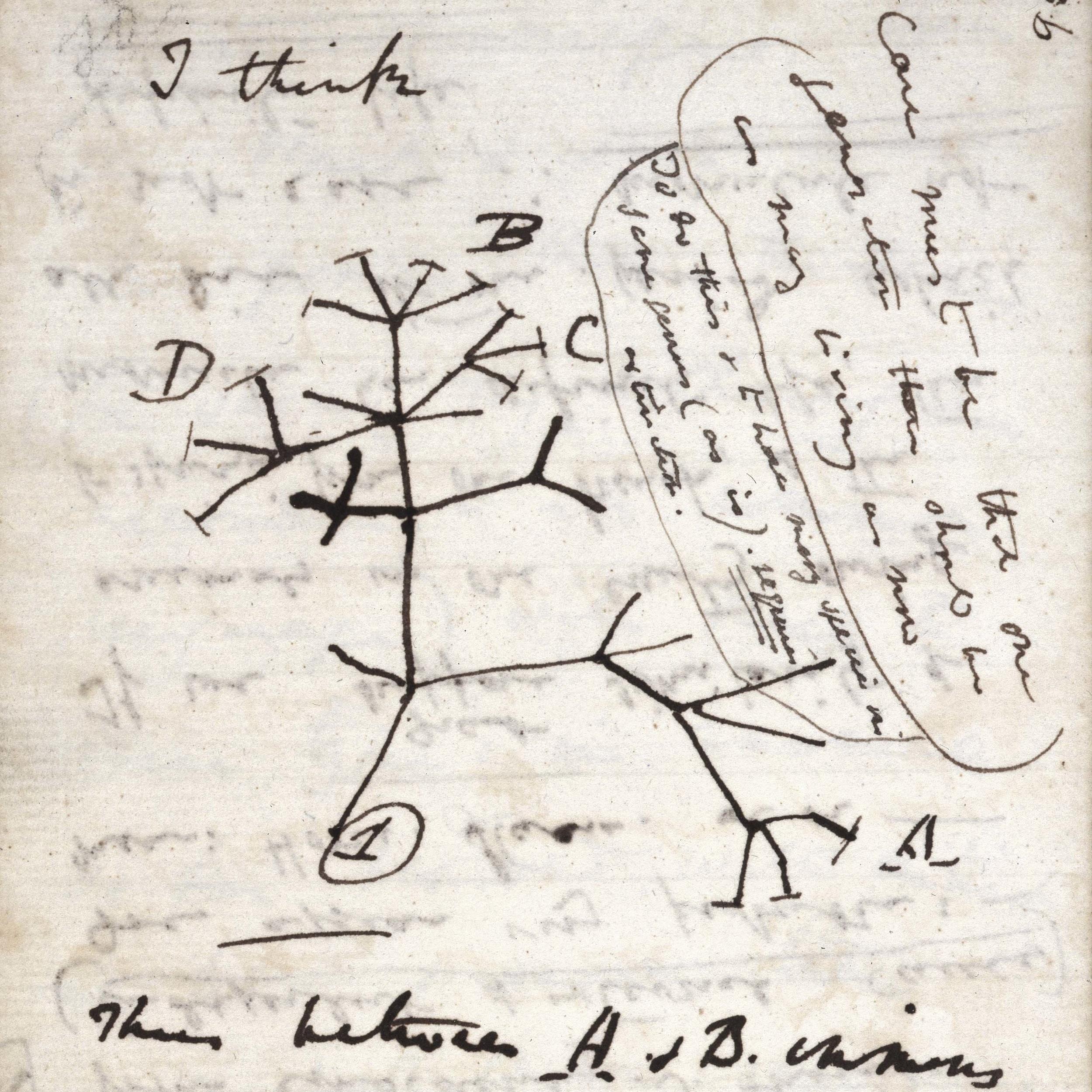 darwin-bio-7-notebook.jpg