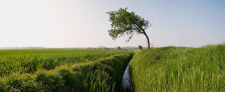 'Waaiboom op Walcheren' - Landschap voor Atlas van Zuid-Westelijke Delta.