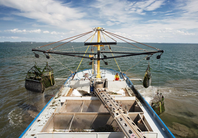 Mosselvangst Yerseke Oosterschelde - client: Ministerie van Infrastructuur en Waterstaat
