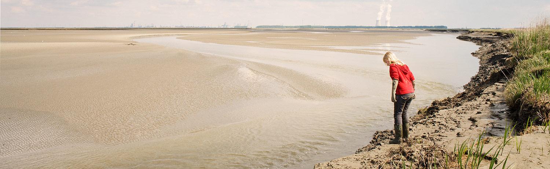 Land van Saeftinghe.