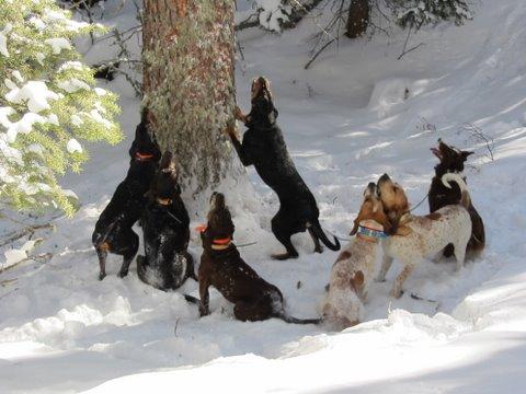 1-28-12 dog team.JPG