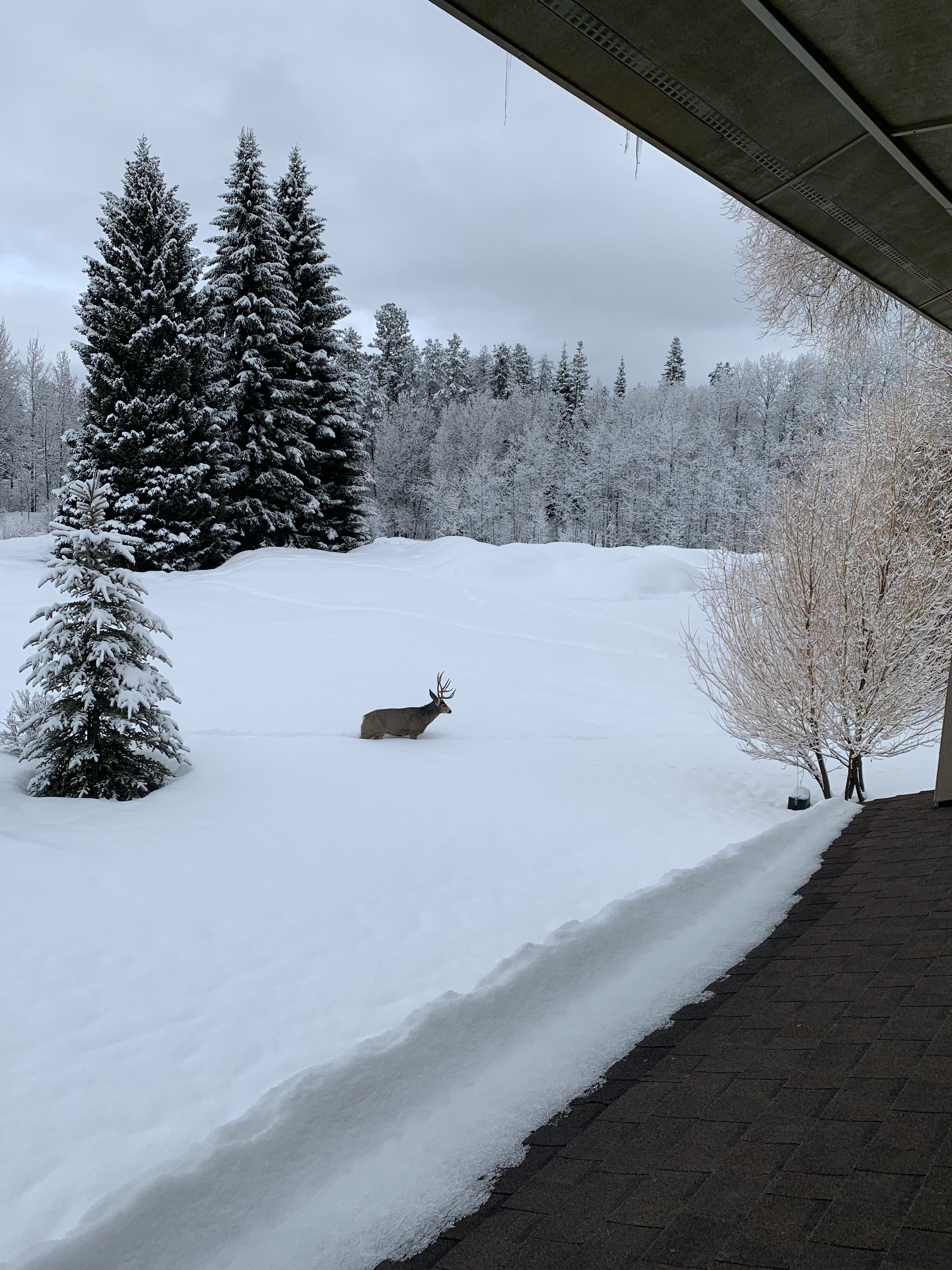 Jared Montague often sees wildlife wherever he is in McCall. Recently, he and his son spotted a moose during a bike ride.  Photo courtesy of Greg Spencer