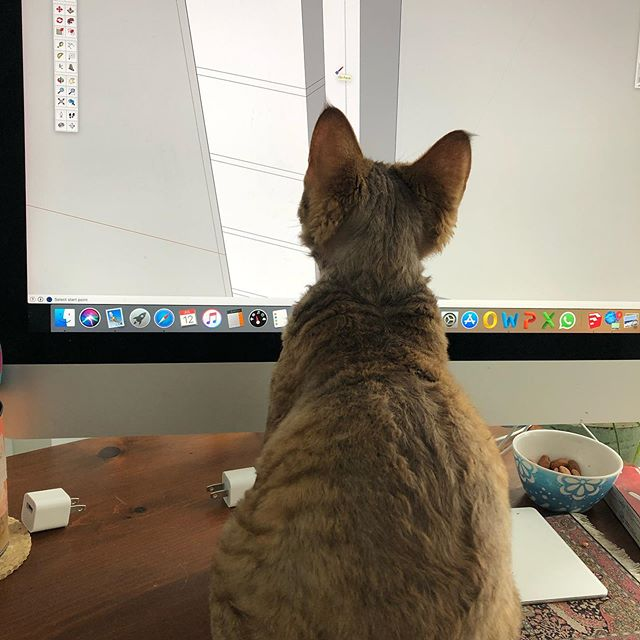 When the cat comes to do quality control on your technical drawings!