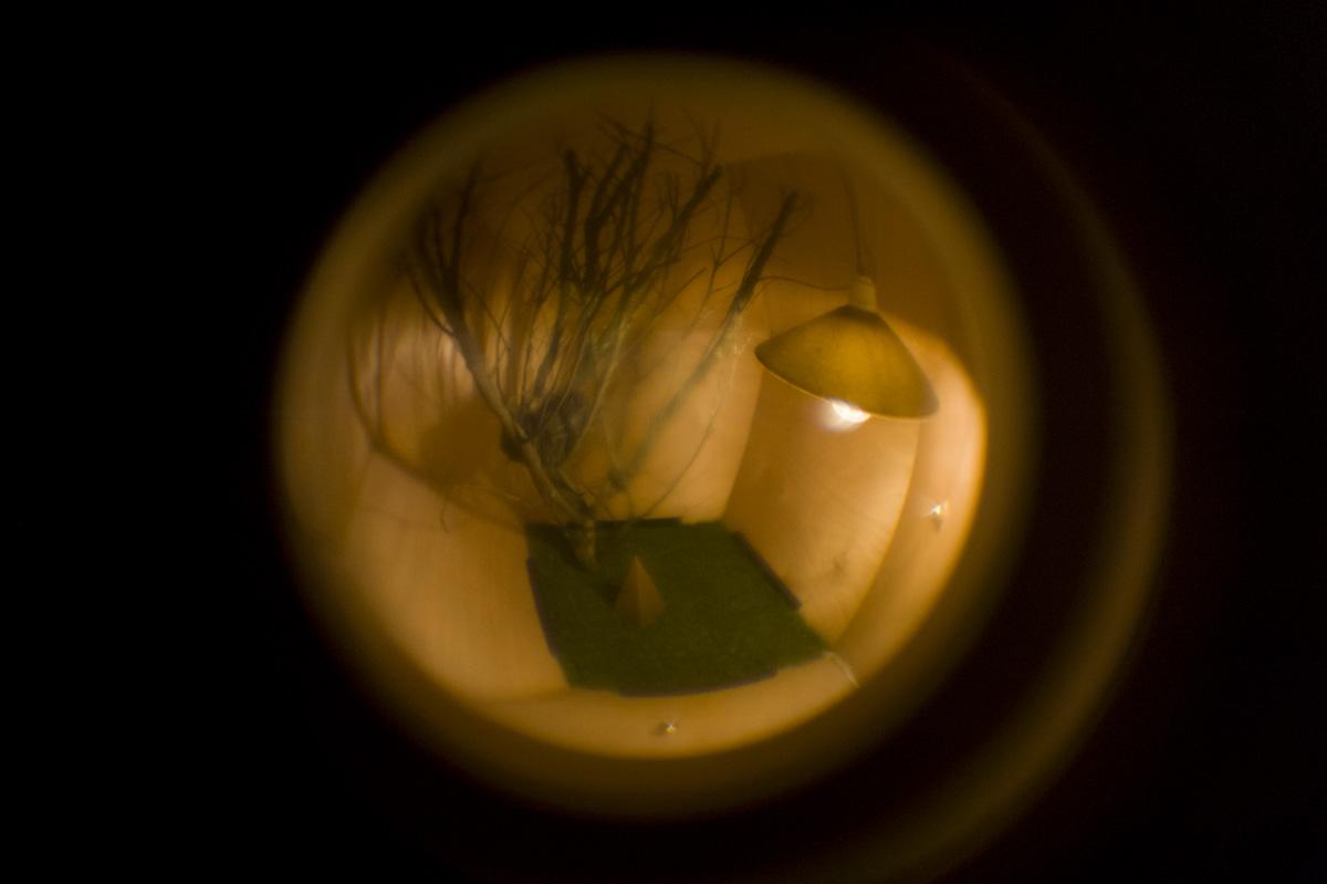 Tony De Goldi. Image: Max Bellamy