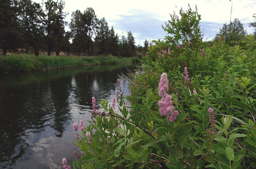 deschutes-river-ranch-9-river-flowers.jpg