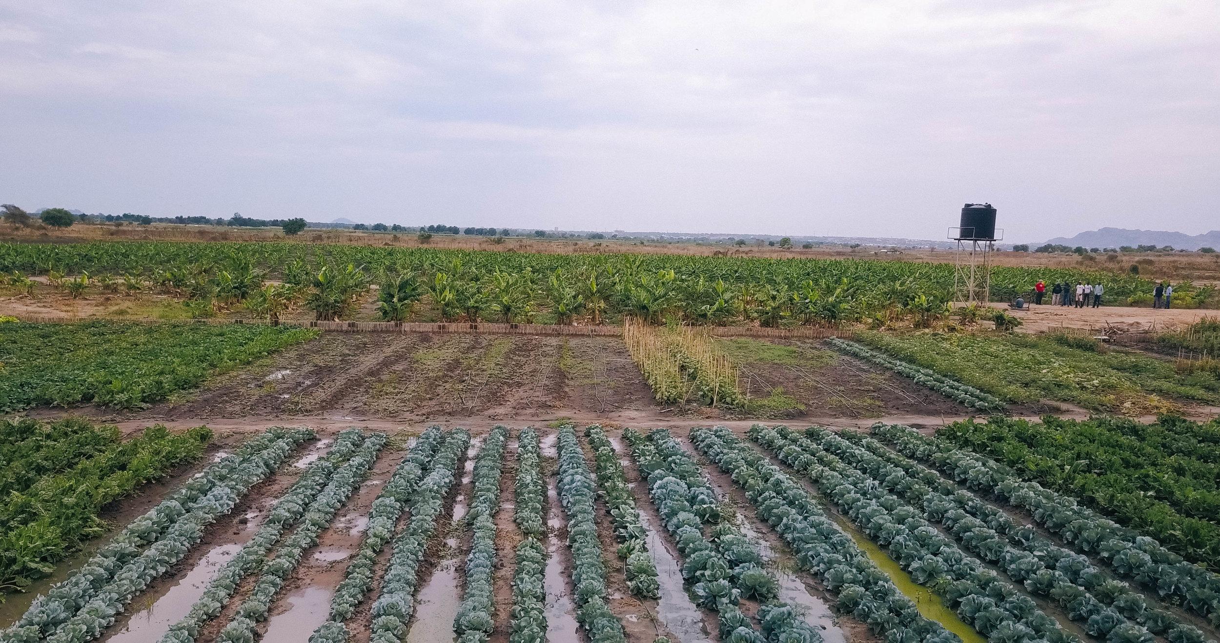 Israeli Farm.jpg