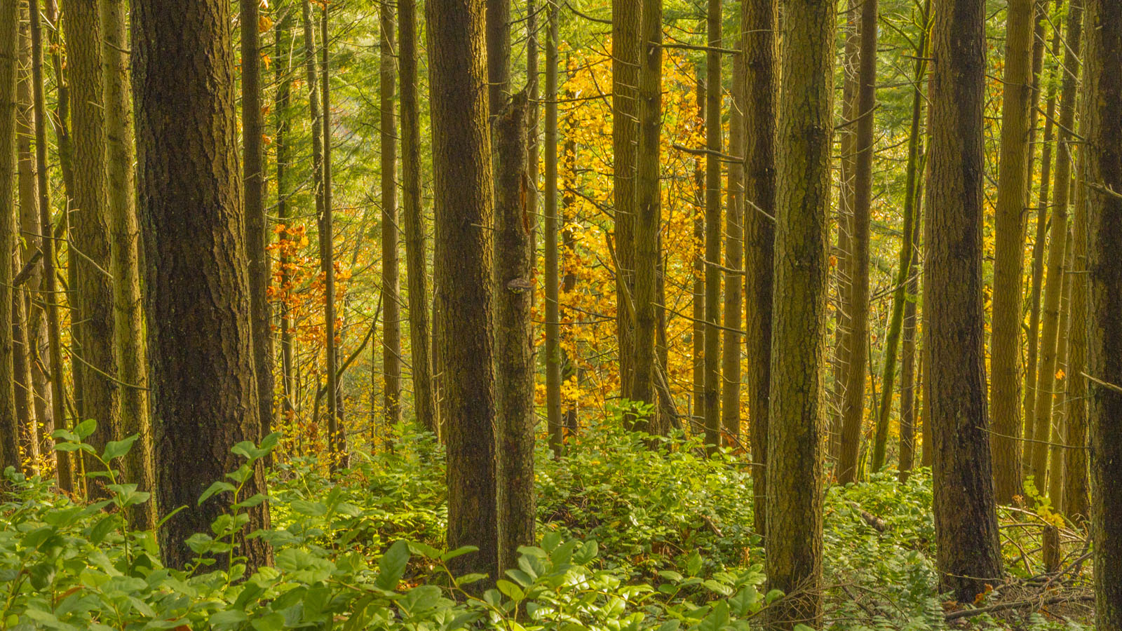 2_Forest-through-the-trees_KSwanson_1600x900.jpg