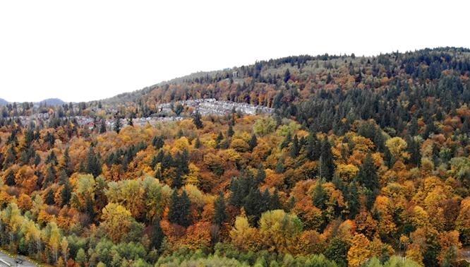 Fall+bergsma.jpg