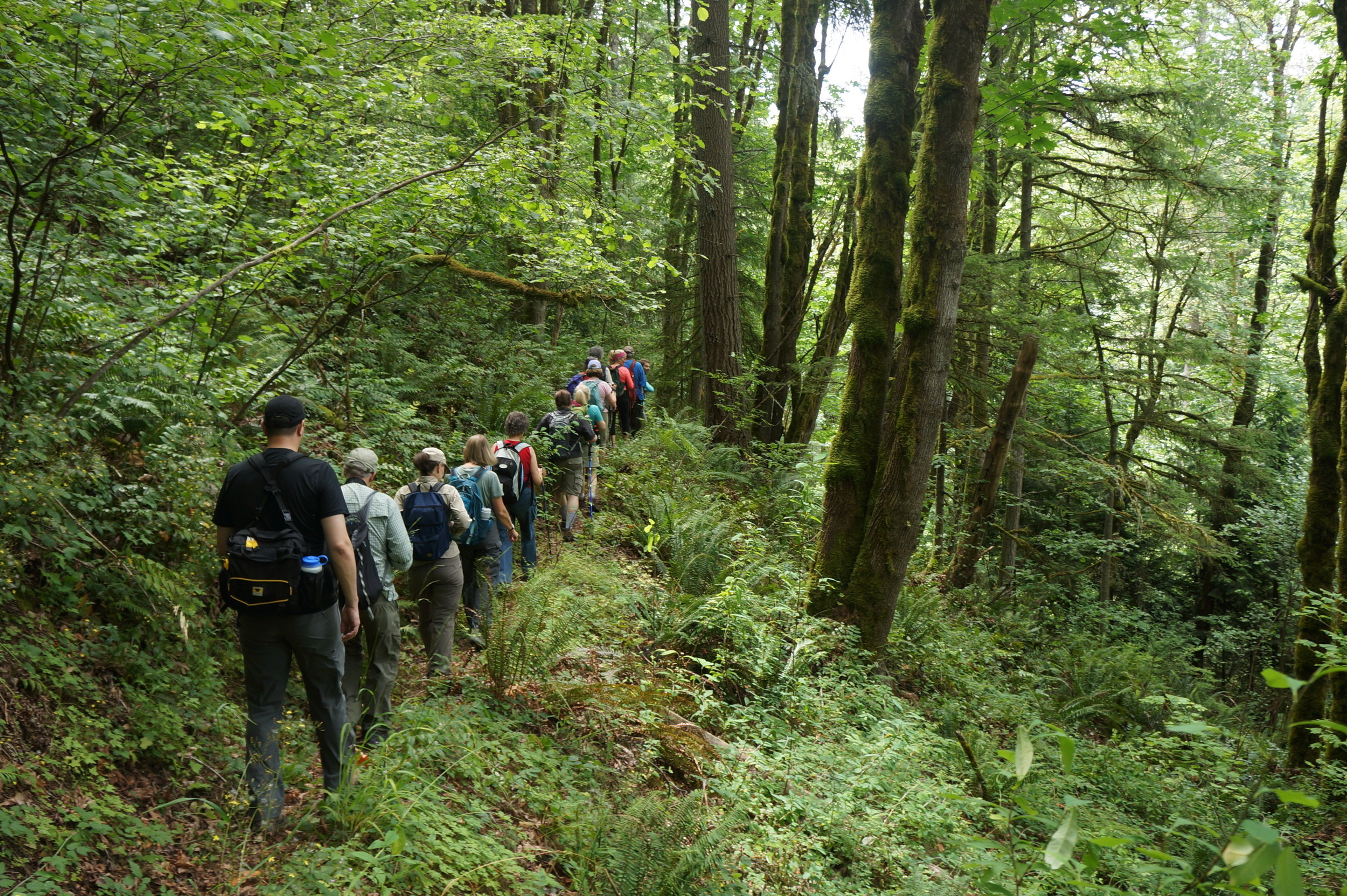 Hikers enjoying the lush surroundings of Squak Mountain on the way to see Mark's Wall.