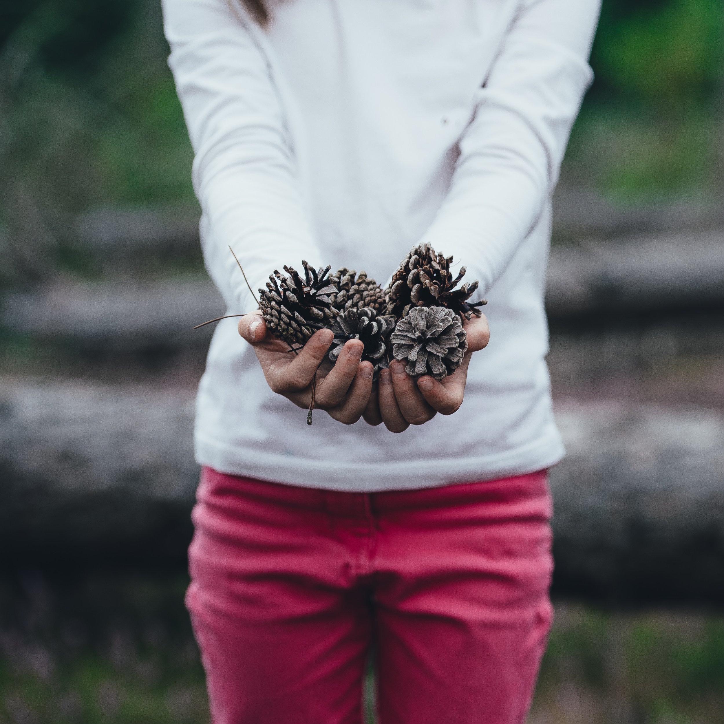 DIY essential oil scented pine cones.