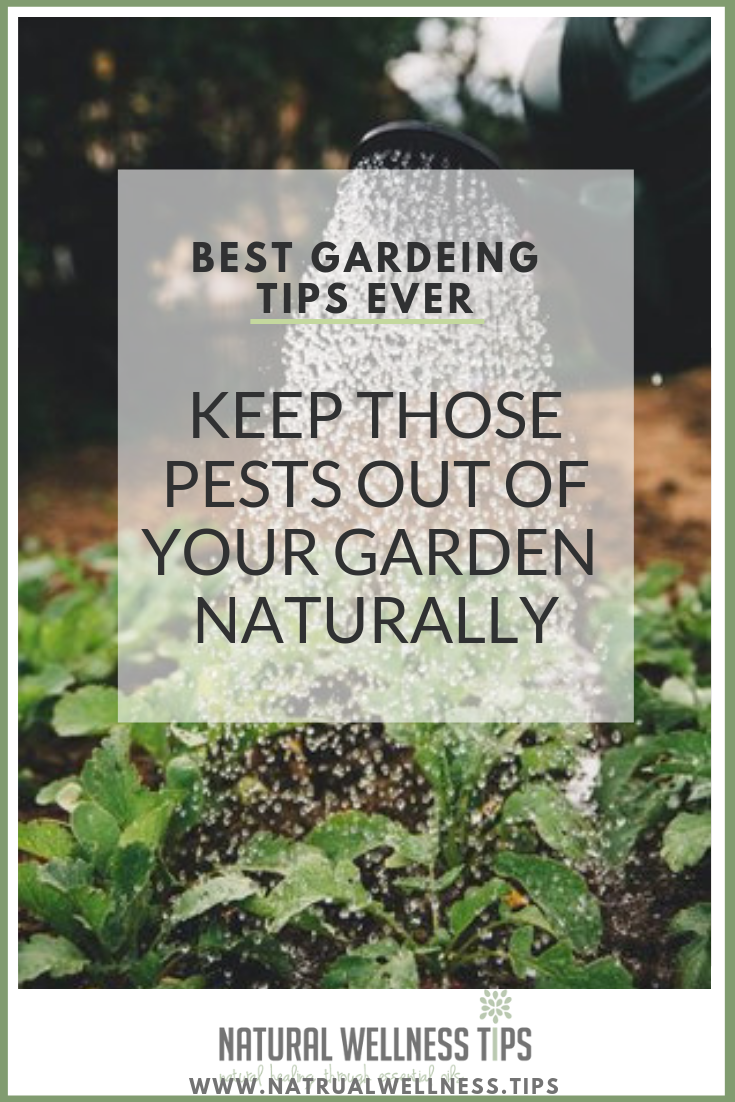 Keep those pests out of your garden naturally with doterra essential oils