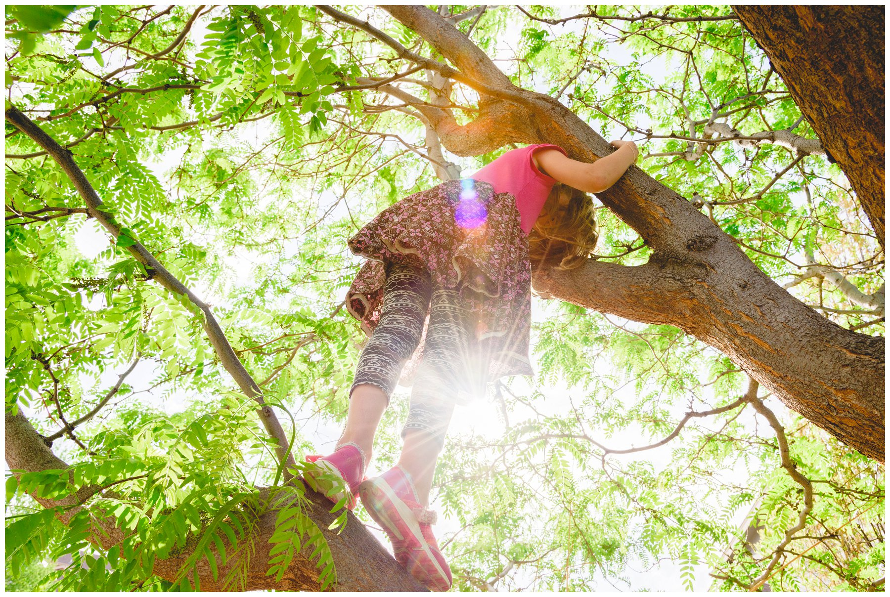 TreeClimbing1.jpg